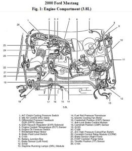 T11067227 Need serpentine belt routing diagram besides  also T12978142 Serpentine belt 2002 mustang gt 4 6 belt moreover  in addition Ford Mustang 2004 Ford Mustang Camshaft Position Sensor Location. on 2001 mustang gt parts