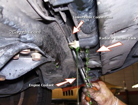 Drain Radiator and Remove Lower Hose Connections